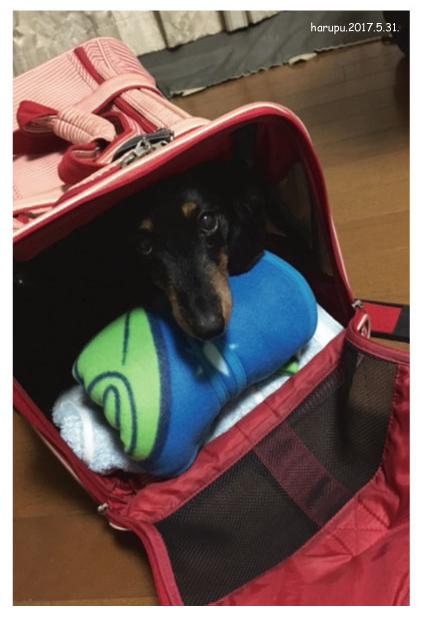 bag-in-bag.jpg