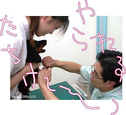 wanko-byo-in-de-hankou.jpg