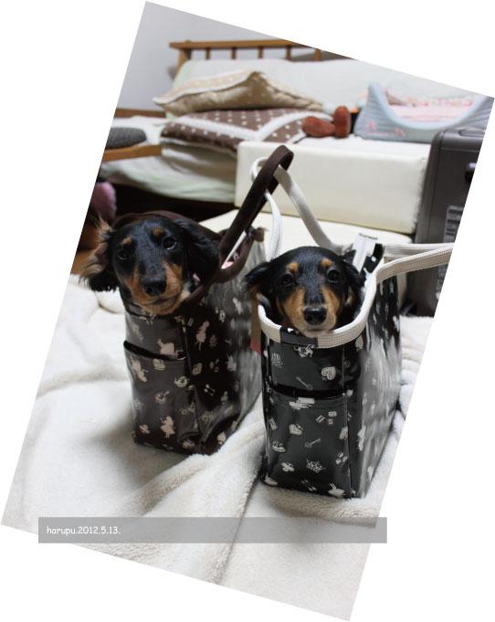 in-bag.2012.05.13..jpg