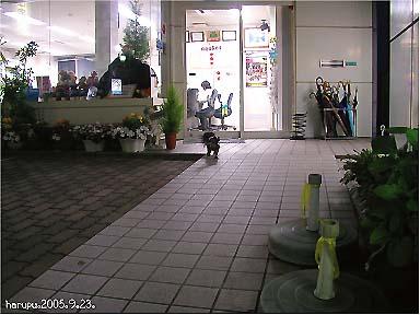 yoru-no-dai-sousamou03.jpg